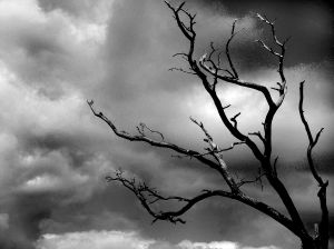 357980_storm_tree